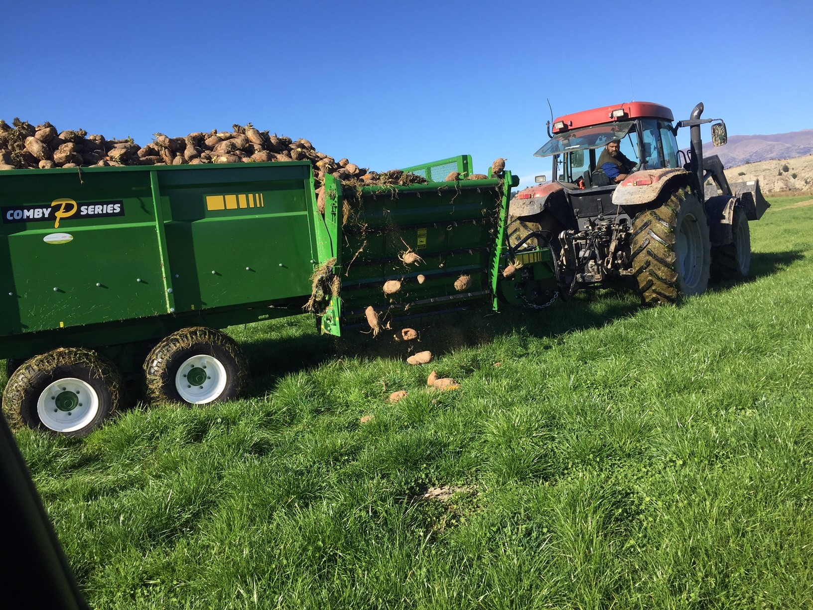 Comby PR Feeding out a load of Fodder beet-2.jpg