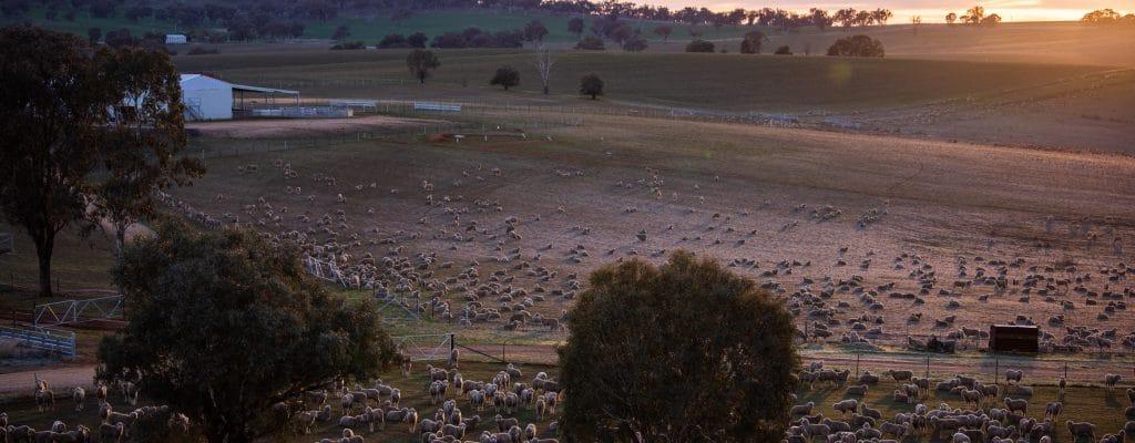 Oxton-Park-Inline-Sheep-Sunset-o54uixoinwnv442fx3h4li85v9yy5xlwj8aml2ydnk