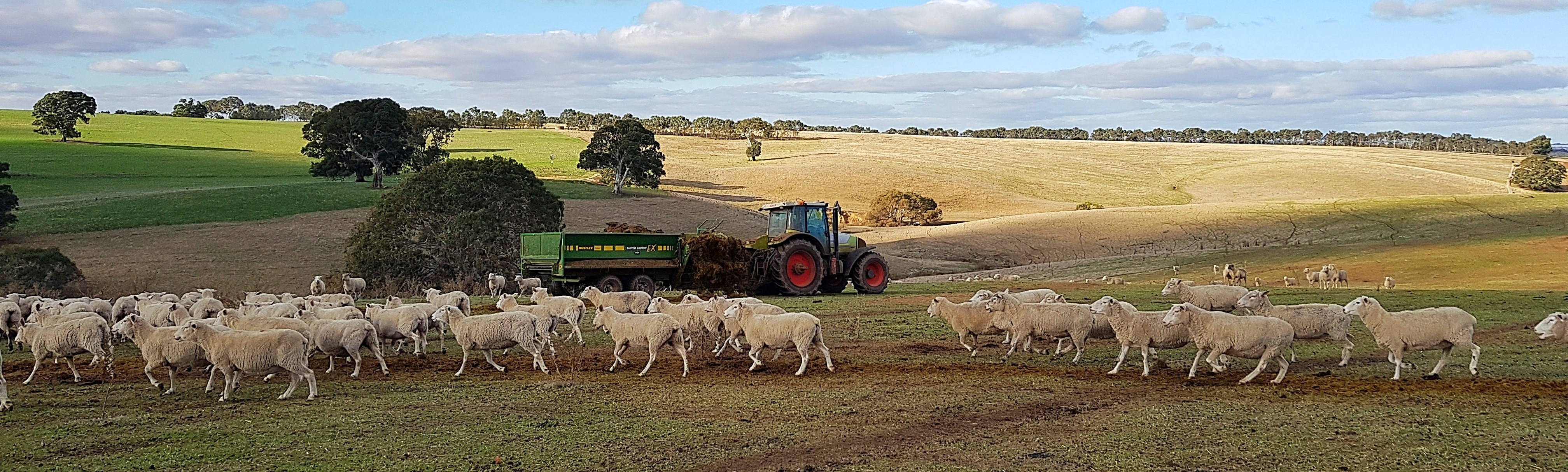 feeding silage to lambs with a super comby EX