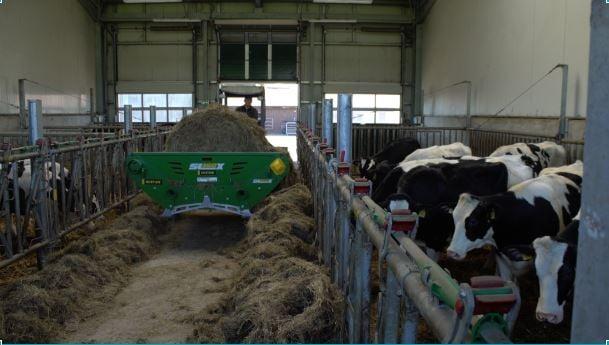 german cattle export2