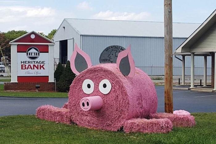 hay-piggy-bank-fan-favorite-1-700x468.jpg