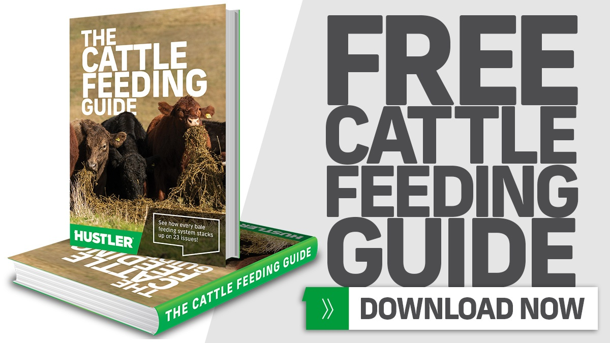 Download Your FREE Cattle Feeding Guide